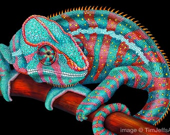 Panther Chameleon Blue Colored Pencil Drawing