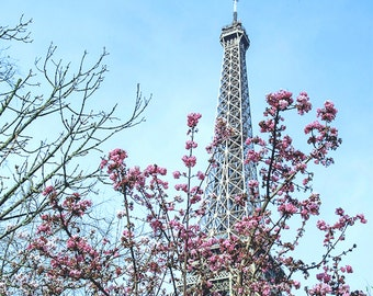 Pink Cherry Blossoms, Paris in the Spring, Eiffel Tower 2016