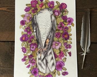 Sparrow Hawk giclee print