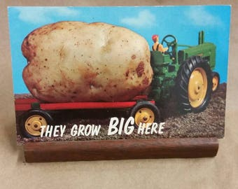 Post Card 'They grow big here'