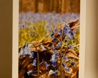 Greetings Card: The Bluebells of Shoreham