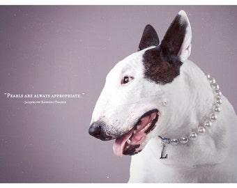 Always Appropriate - Bull Terrier Photographic Art Print