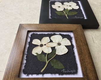 Pressed Dogwood Picture. Pressed Botanical Art. Available in Black and Walnut Frame. 8x8 Provincial Flower of BC