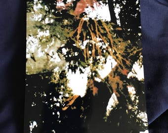 Floral Tree Double Exposed Photography Print