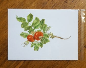 Rosa rugosa unmounted giclee print by Jackie Isard