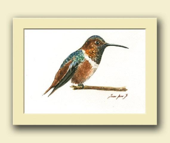 Rufous Hummingbird Hummingbird Painting Watercolor