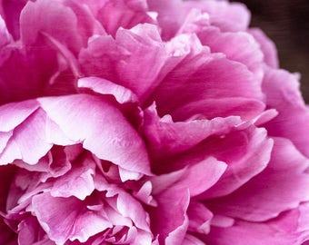 Peony Flower Photo, Cottage Chic Art, Pink Flower Photo, Peony Art Print, Bedroom Wall Art, Canvas Art, Peony Photo, Flower Photograph