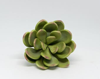 Small Green and Pink Sugar Succulent for wedding cake toppers, sugar flower arrangements and gumpaste decorations