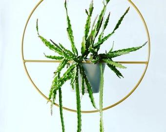 The 'Ring Planter' Plant Hanger