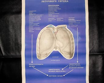 Human anatomy print vintage anatomy scientific print doctor print anatomy posters medicine print anatomy chart medical student gift