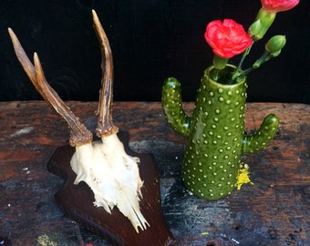 VINTAGE DEER ANTLERS 1-18: Roe deer with skull, mounted on dark and light wooden shields. Great Spring decor pieces.