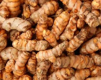 Homegrown organic tumeric bulbs