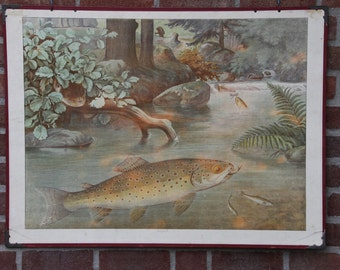 Vintage  two-sided Chart  Brook Trout Otter Turtle   School Chart