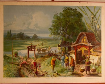 Vintage  Old Print on cardboard Rice School Chart Lithograph