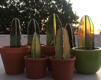 100% draught-tolerant stained glass potted cactus plants