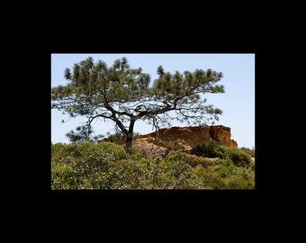 Torrey Pines Landscape - Color