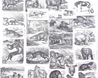 Antique Paper Ephemera Pack of Mammals 1890s - Art Journal Supply, Junk Journal Supplies, Collage, Victorian Natural History, Bear, Otters