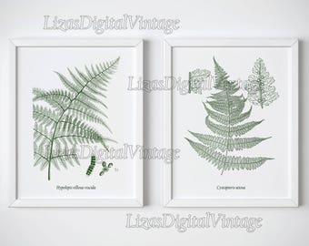 Set of 2 fern prints, Fern illustration, Botanical digital print, Vintage botanical print, Instant download, 8x10, 11x14, A3, Art print, JPG