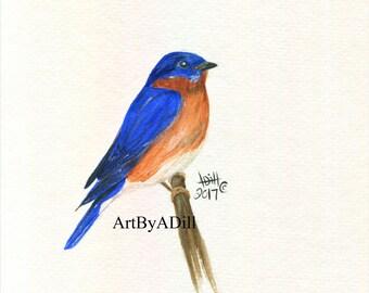 Blue Bird- Fine Art Print