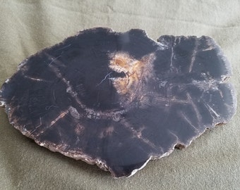 Petrified wood slab  17-001