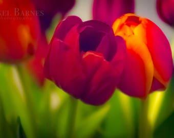 Abstract Tulips Photograph- DIGITAL PRINT