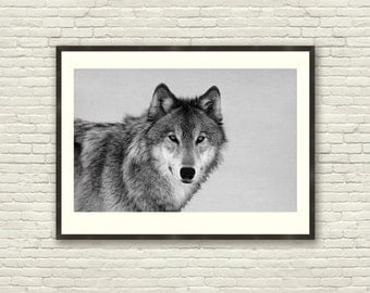 gift, Animal photography, animal decor, animal wall art, wild animal, wolf, animal print, woodland wall art, Nursery Wall Art, nursery decor