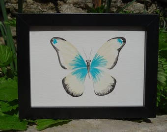 Butterfly Turquoise