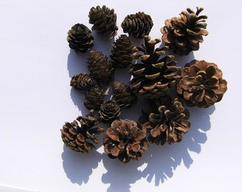 Pine Cone cones blend natural materials to the handicraft of decorative materials Bastelmaterial pinecone pin
