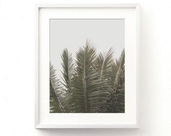 tropical print, palm fronds photograph, digital file, palm tree photo, nature photography, green decor, nursery wall art, cafe print, art