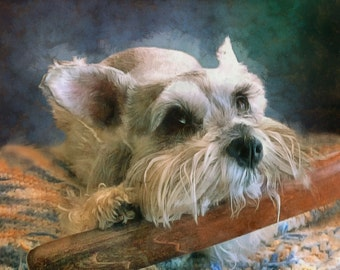 PET Portrait, Digital Painting from your photo, Free Shipping!