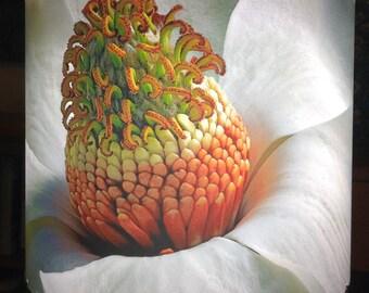 Southern Magnolia Blossom Lampshade
