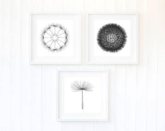 Dandelion wall art, monochrome dandelion wall print,  dandelion prints, dandelion print, dandelions wall art, black and white photography