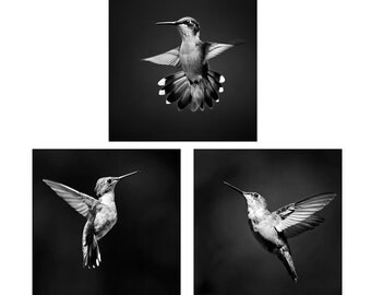 Hummingbird Prints, Black and White Photo Set, Set of 3 Prints, Hummingbird Photo Set, Hummingbird Photography, Photo Gift Set, Wall Art Set