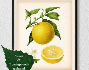 Botanical wall art, Citrus print, Orange print, Kitchen prints, Fruit wall art, Home print, Instant download art, Antique printable art #53