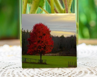 Foliage on ceramic coasters,gift for all decores,the red, tree Lee New Hampshire.
