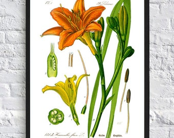 Flower Print - Botanical Wall Art Print - Lily Poster - Orange Green - Thome Illustration