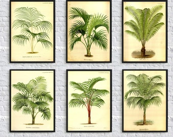 Palm Tree Print - Palm Leaves Print - Botanical Illustration - Plant Gallery - Palm Tree Collection - Living Room Decor - Kitchen Wall Art