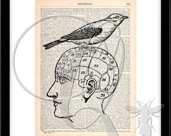 Bird Print Phrenology Head Dictionary Art Print vintage bird wall art bird watcher gift home office wall art book page art science art no 96