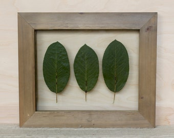 Real Pressed Leaf Botanical Art | Northwest Farmhouse Decor | Rustic Barnwood Float Frame | Pressed Plant Wall Hanging | Fixer Upper Style