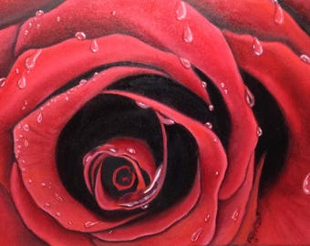 The Rose - oil painting with rain drops/ 16x18