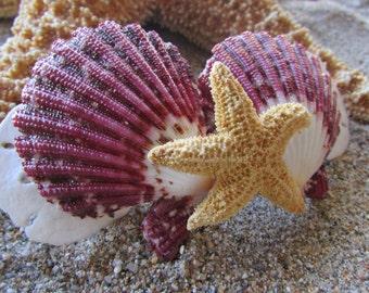 Double Purple Scallop And Sand Dollars With Sugar Starfish Barrette- Mermaid Hair