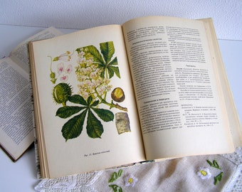 Vintage Illustrated Botanical Book medicinal plants Vintage book illustrations drug plants  medicinal herbs Entomology  book