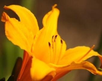 Yello Flower