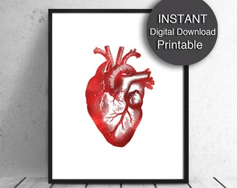 Anatomical Heart, PRINTABLE Anatomical Decor, Red Heart Download, Human Heart Print, 16x20, 8x10, A4 Printable Valentines Day