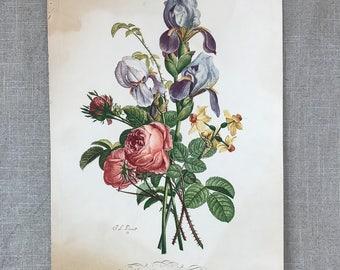 Vintage French Botanical J L Prevost Print