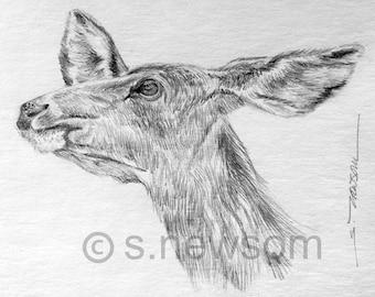 White-tailed Deer - ORIGINAL ART/Deer drawing/Wildlife Art/Pencil Drawing