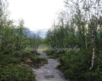 Landscape Photography Print, Mountain Photography, Trail Picture, Birch Forest in Mountains, Fine Art Photo, Digital Downlad