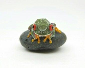 Red Eyed Tree Frog Print, Photography, Wildlife, Nature, Animal, Animals, Amphibian, Amphibians, close up frog, fine art