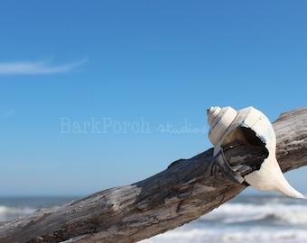 Conch shell, driftwood; beach house; wall art; poster; bedroom; bathroom; Assateague Island; Chincoteague Island; Maryland, Virginia Shore