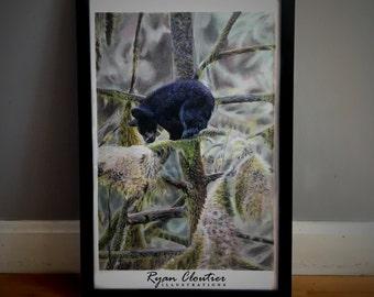 Don't Look Down (Black Bear Cub) Print